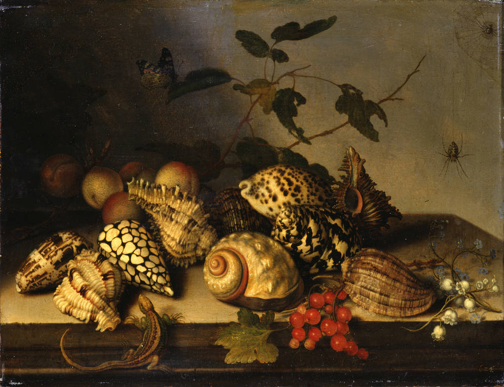 Fruit and Shells