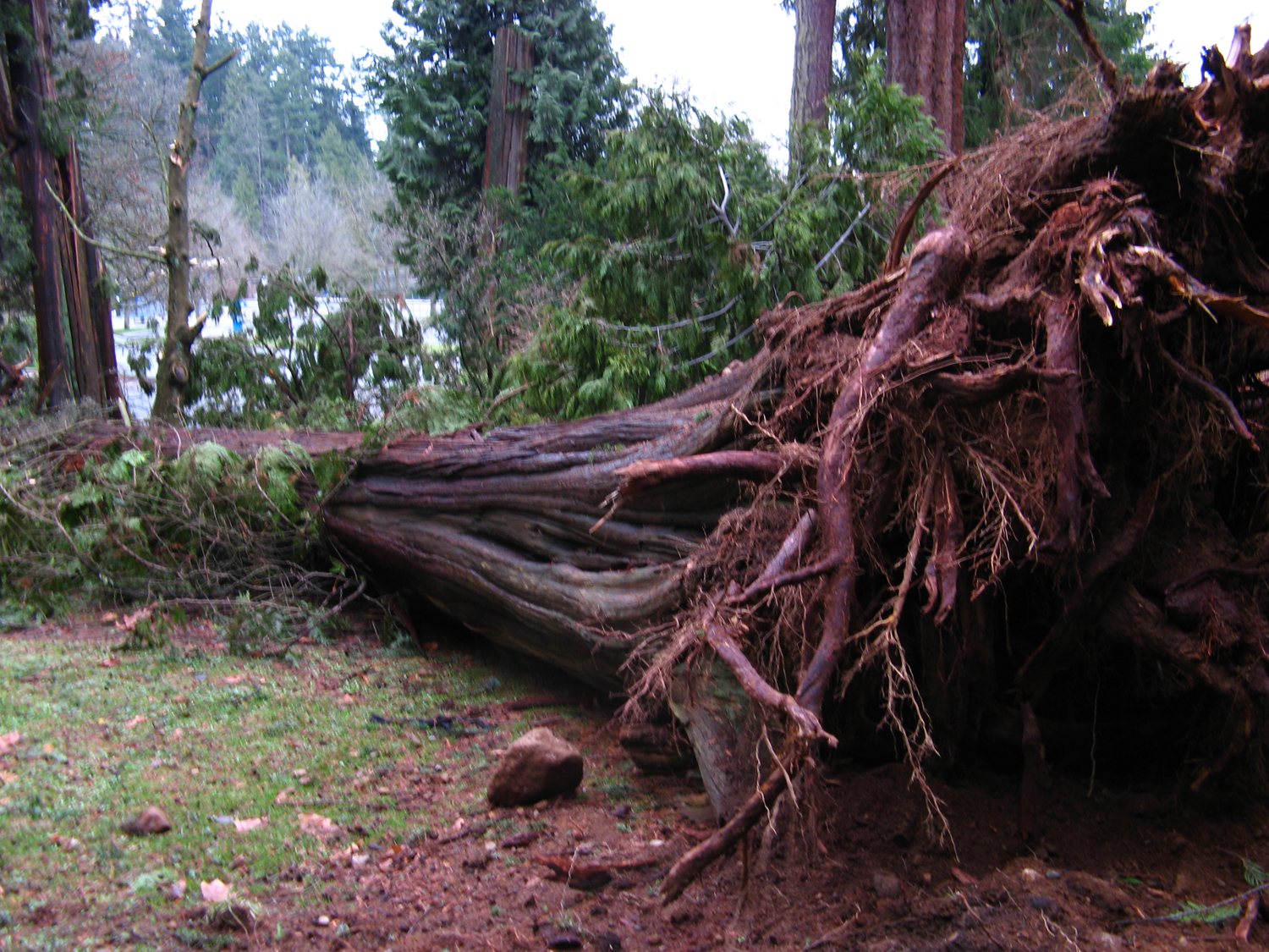 the trees are down analysis The trees are down essay by charlotte mew the trees are down essay by charlotte mew  admission analysis book business chicago communication company crime culture .