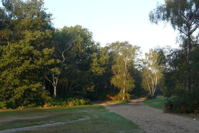 Bridleways on Wimbledon Common - geograph.org.uk - 1507578