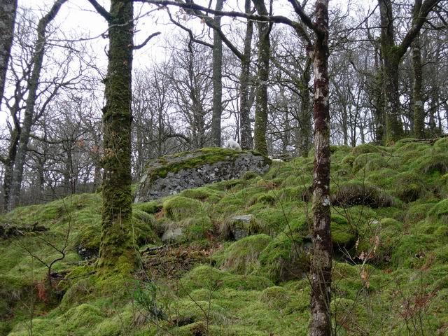 Coed Bryn-engan - geograph.org.uk - 157094