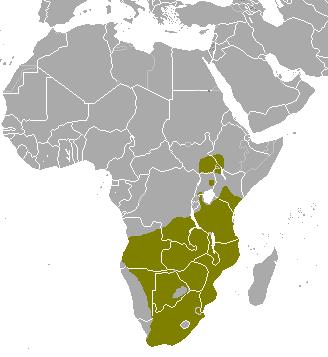 Common eland