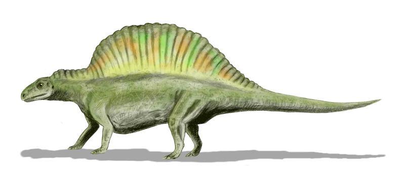 File:Ctenosauriscus BW.jpg