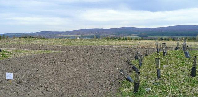 File:Culloden Moor Battlefield - geograph.org.uk - 883765.jpg