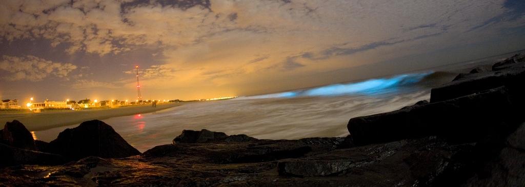 Биолюминесце́нция — способность живых организмов светиться, достигаемая самостоятельно или с помощью симбионтов. Название происходит от др.-греч. βίος, «жизнь» и лат. lumen — «свет». Свет создаётся у более высокоразвитых организмов в специальных светящихся органах (например, в фотофорах рыб), у одноклеточных эукариот — в особых органоидах, а у бактерий — в цитоплазме. Биолюминесценция основывается на химических процессах, при которых освобождающаяся энергия выделяется в форме света. Таким образом, биолюминесценция является особой формой хемилюминесценции.