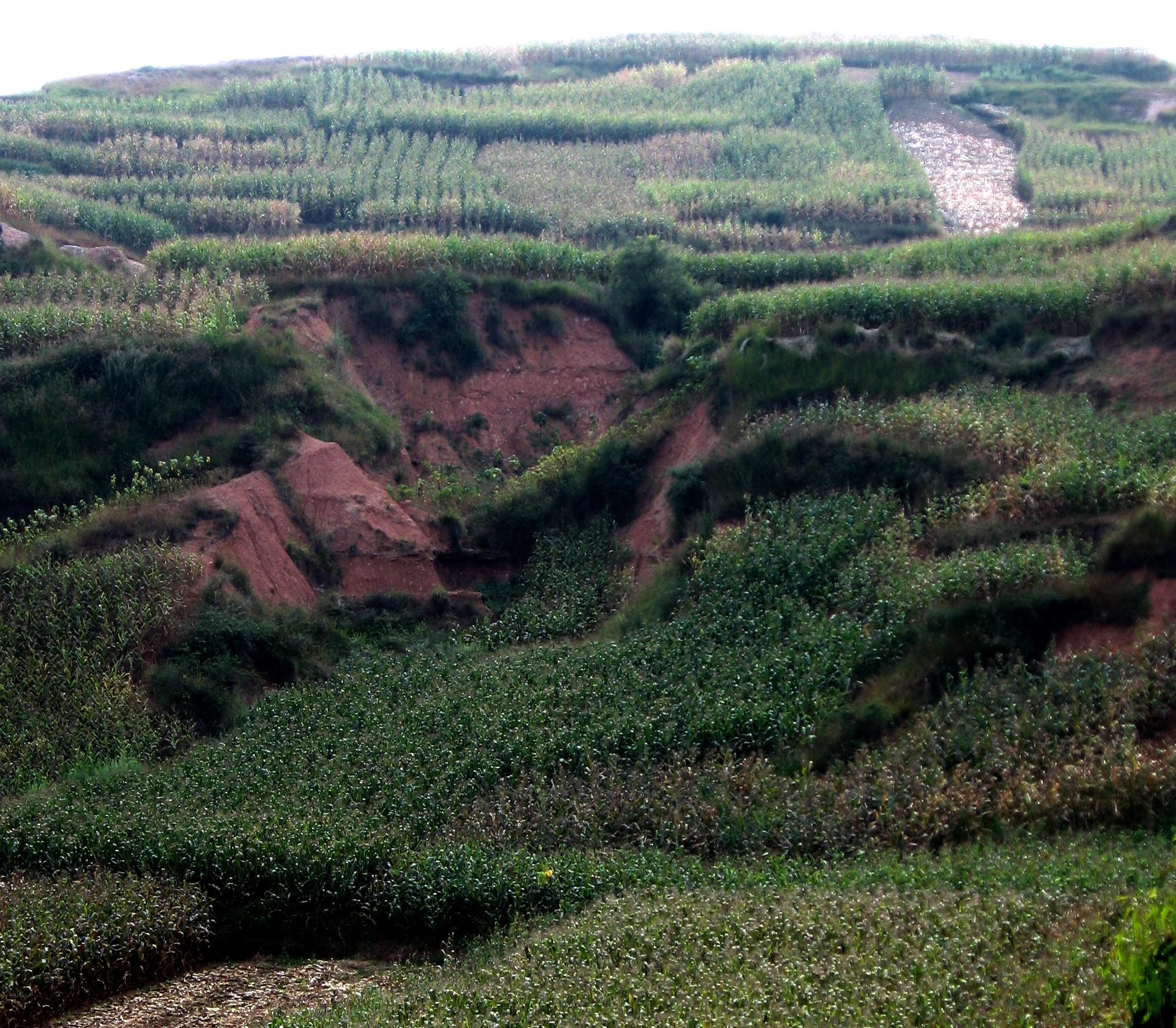yunnan farmland