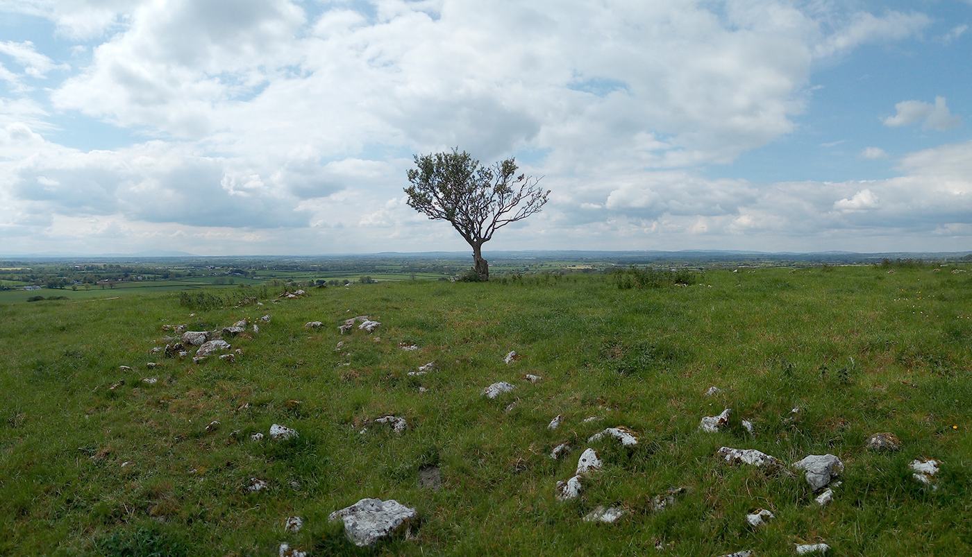 An image of a lone hawthorn tree in Co. Kilkenny.
