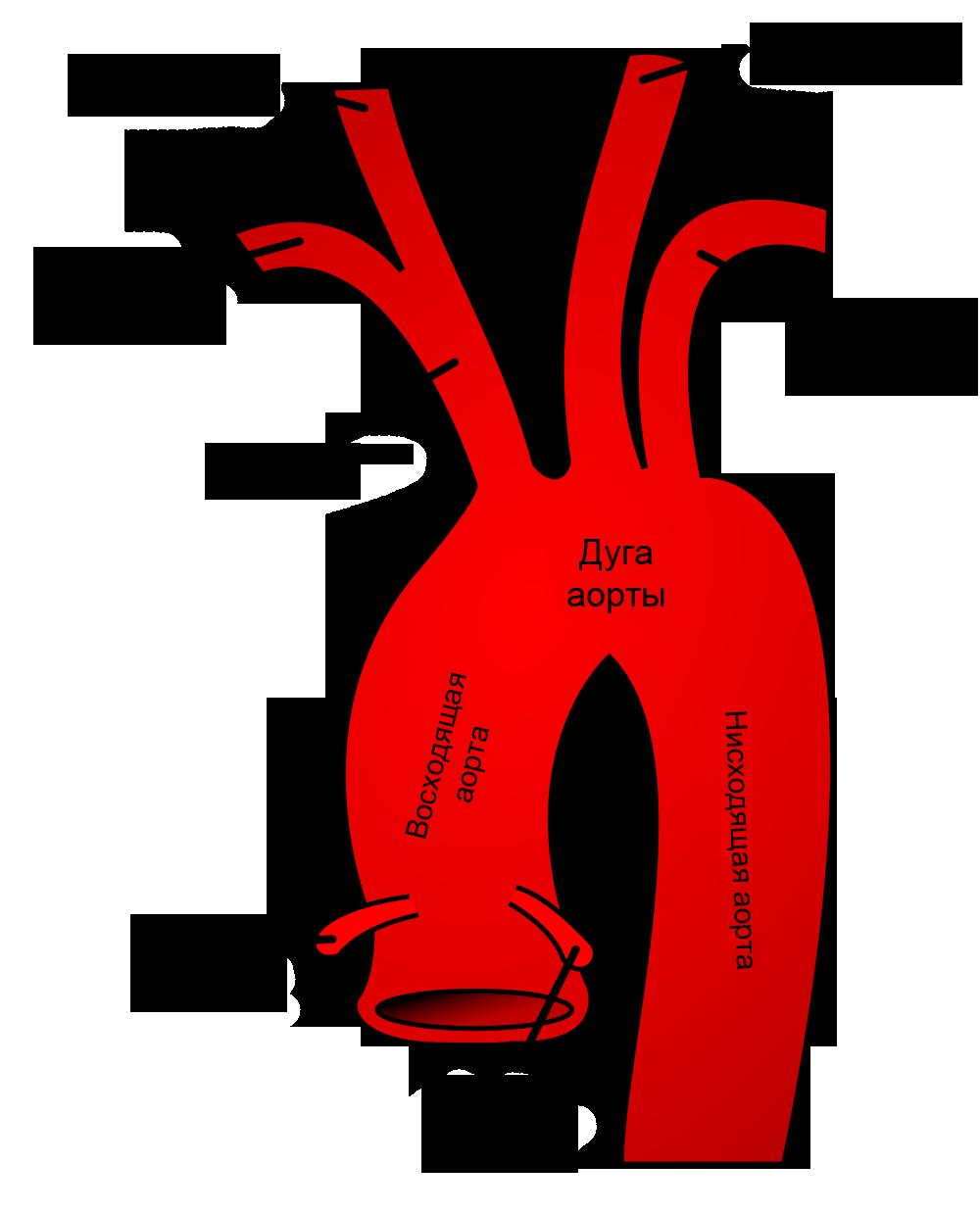 Артерии головы и шеи схема фото 360