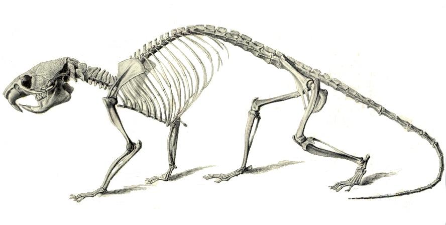 Скелеты танцуют картинка