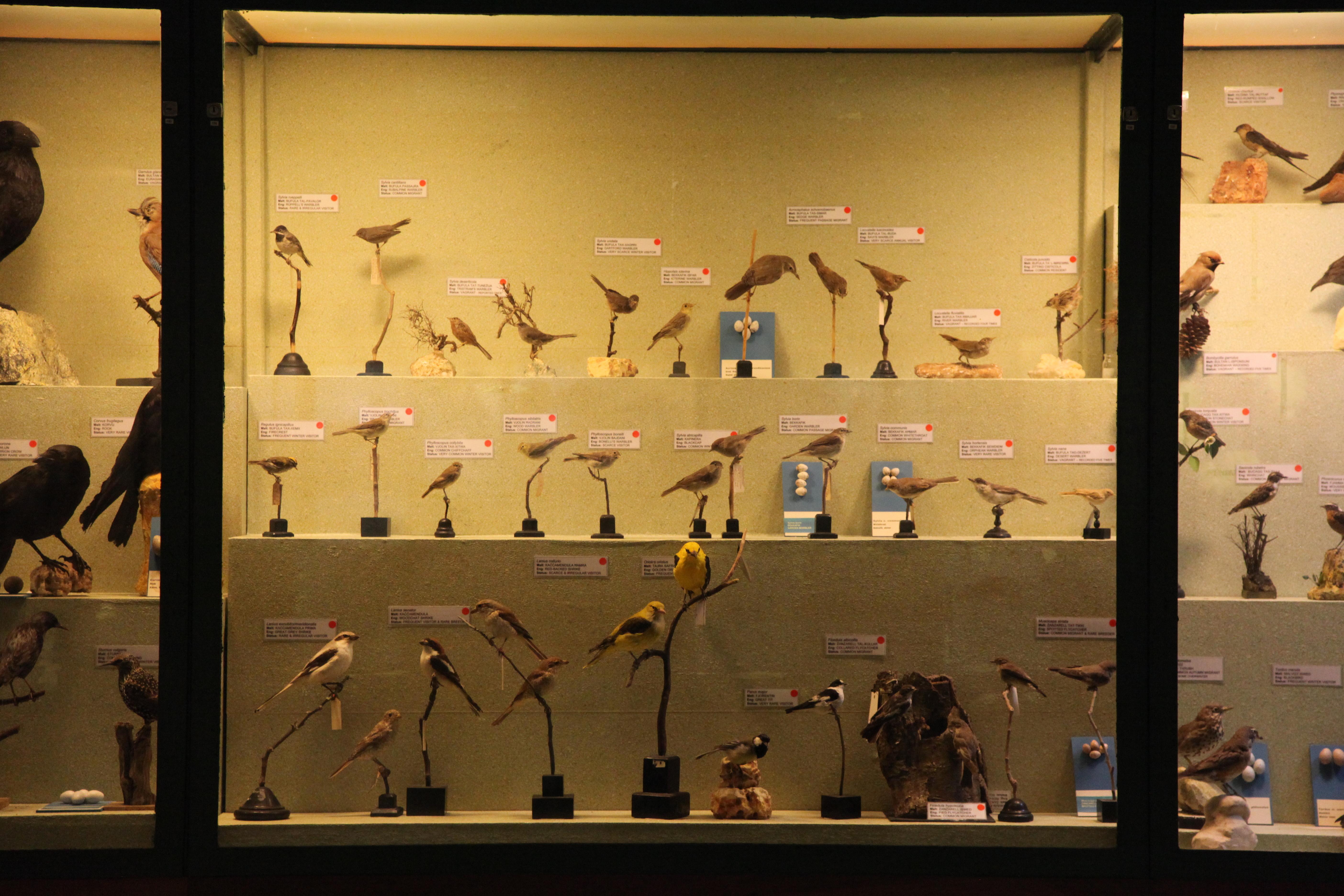 Natural Museum Of Natural History Malta