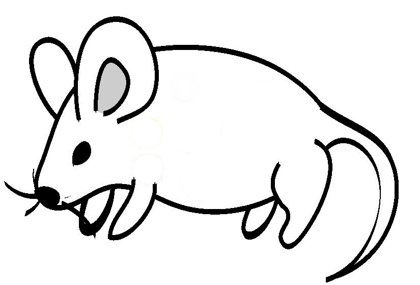 Line Art Clipart : File mouse line drawing g wikimedia commons