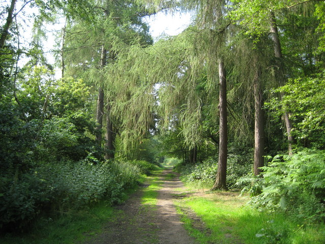Oxhey Woods Local Nature Reserve - geograph.org.uk - 1375334