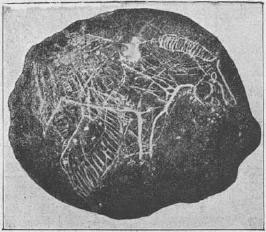 Paleolithic rock drawing.jpg