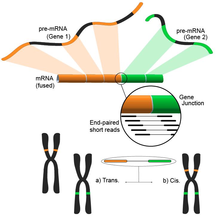 File:RNA Seq Fusion Gene.png
