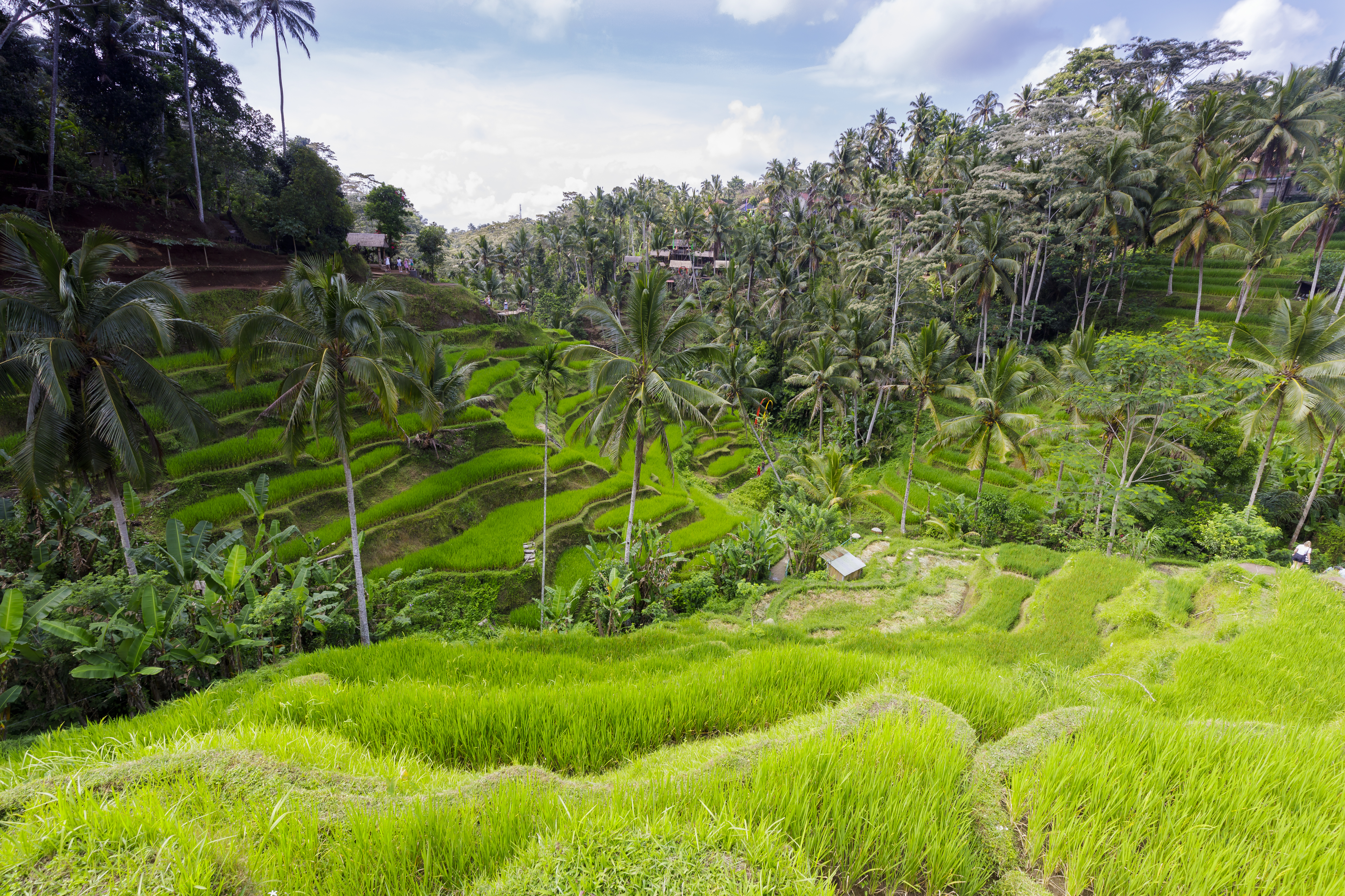 Rice terraces on Bali - Tegalalang Rice Terrace - Indonesia 05.jpg