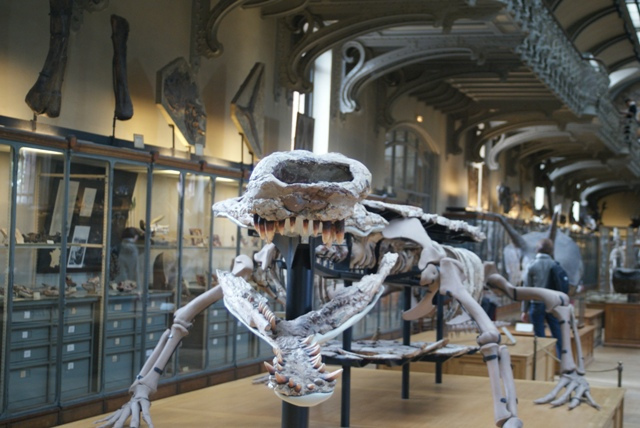 File:Sarcosuchus Paris.jpg