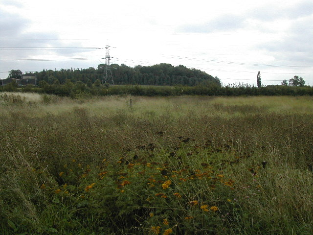 Seedheads in the wildflower meadow - geograph.org.uk - 55395