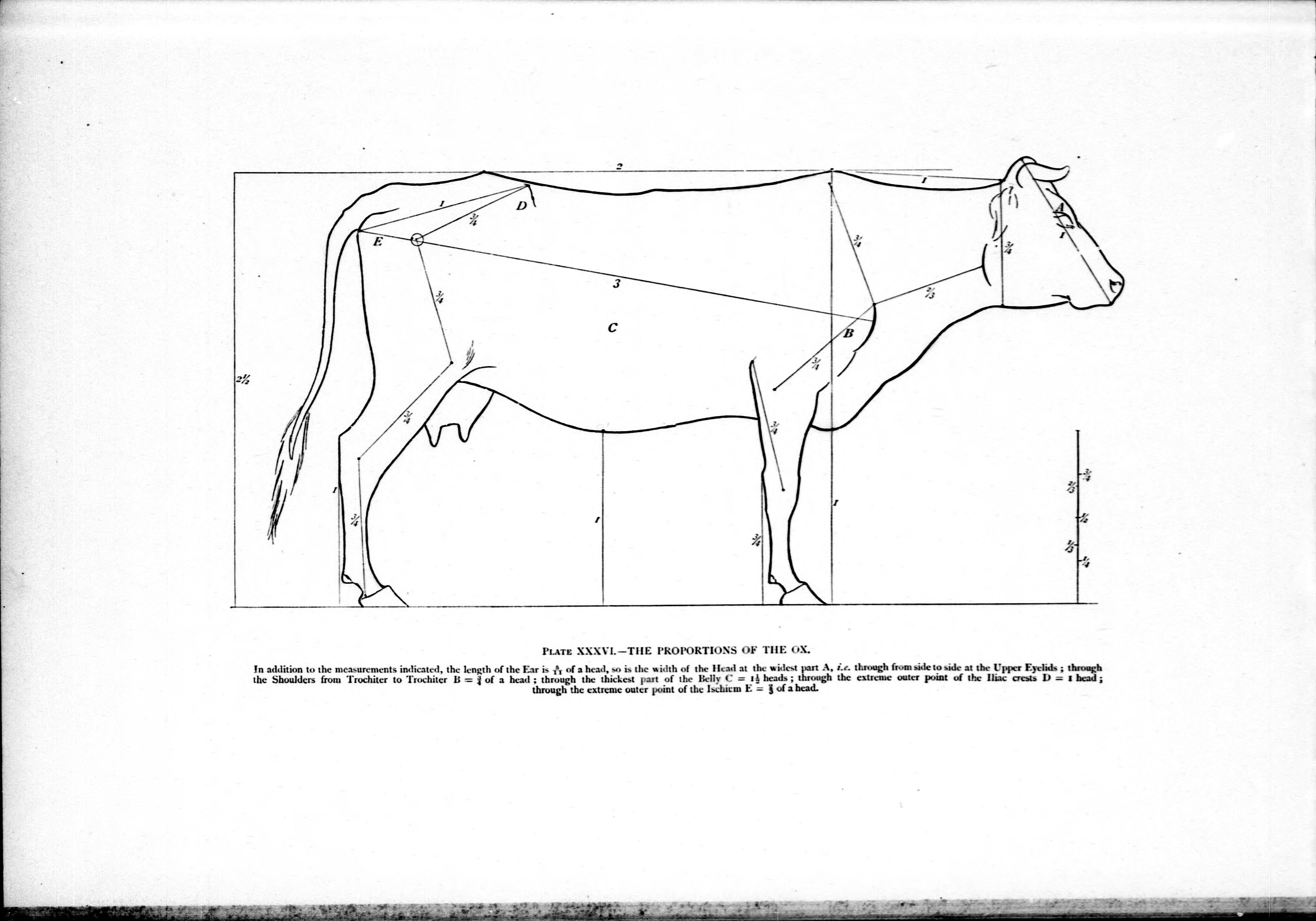 File:Studies in the art anatomy of animals (microform) - being a ...