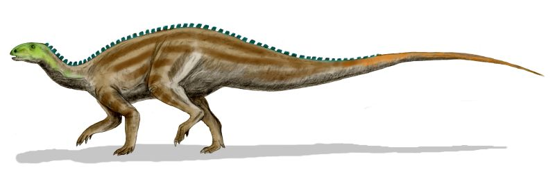 Picture of species what utahraptor hunted.