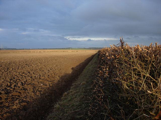 File:Thrashed hedgerow - geograph.org.uk - 1108810.jpg