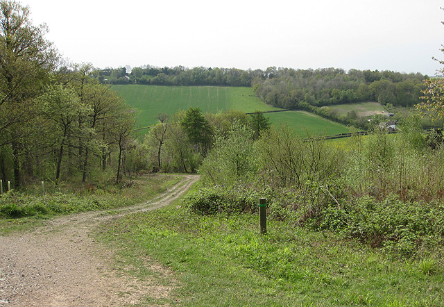 Track in Haugh Wood - geograph.org.uk - 1274339