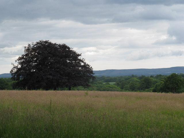 View across Cuckfield Park - geograph.org.uk - 1365984