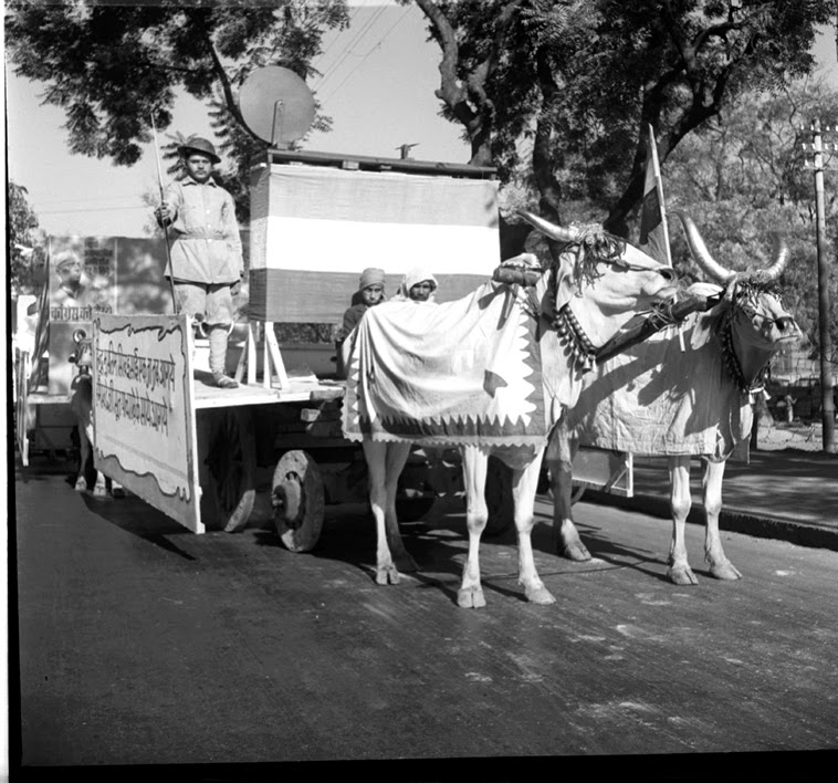 Filea Congress Procession Including Bullocks And A Flag A Pair Of