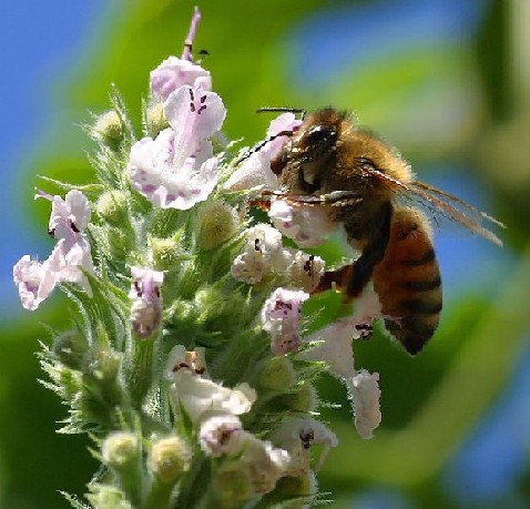 file abella     wikimedia commons
