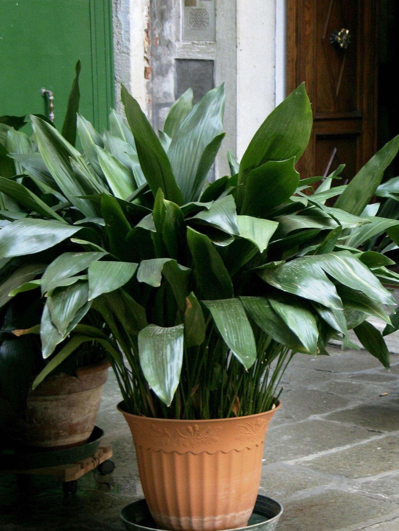Фото всех цветов комнатных растений