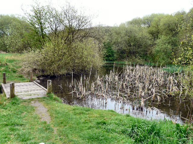 Brushes Pond - geograph.org.uk - 1280169