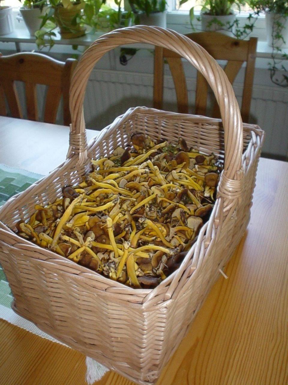 pastile galbene mari pentru viermi cause of laryngeal papillomas