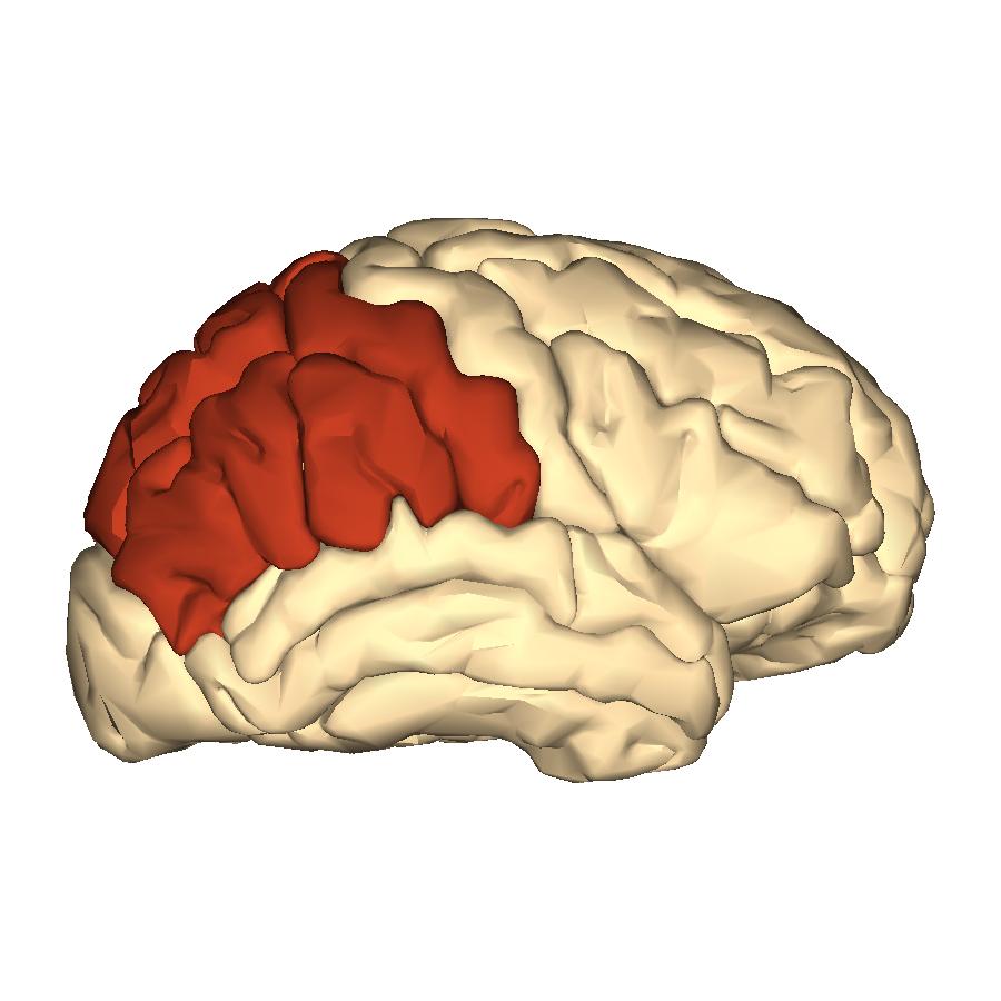 The Parietal Lobe Number 10the Cerebrum