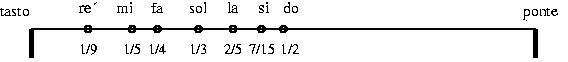 Cordado2.jpg