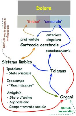 Elaborazione di segnali algesici in dolori