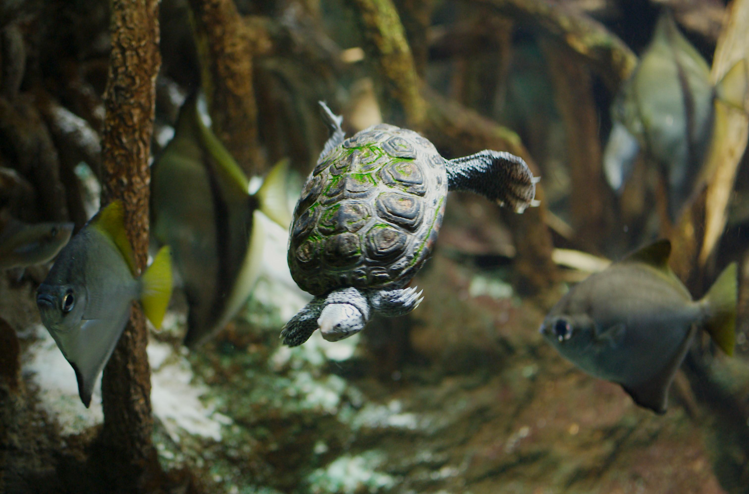 Image Result For New England Aquarium