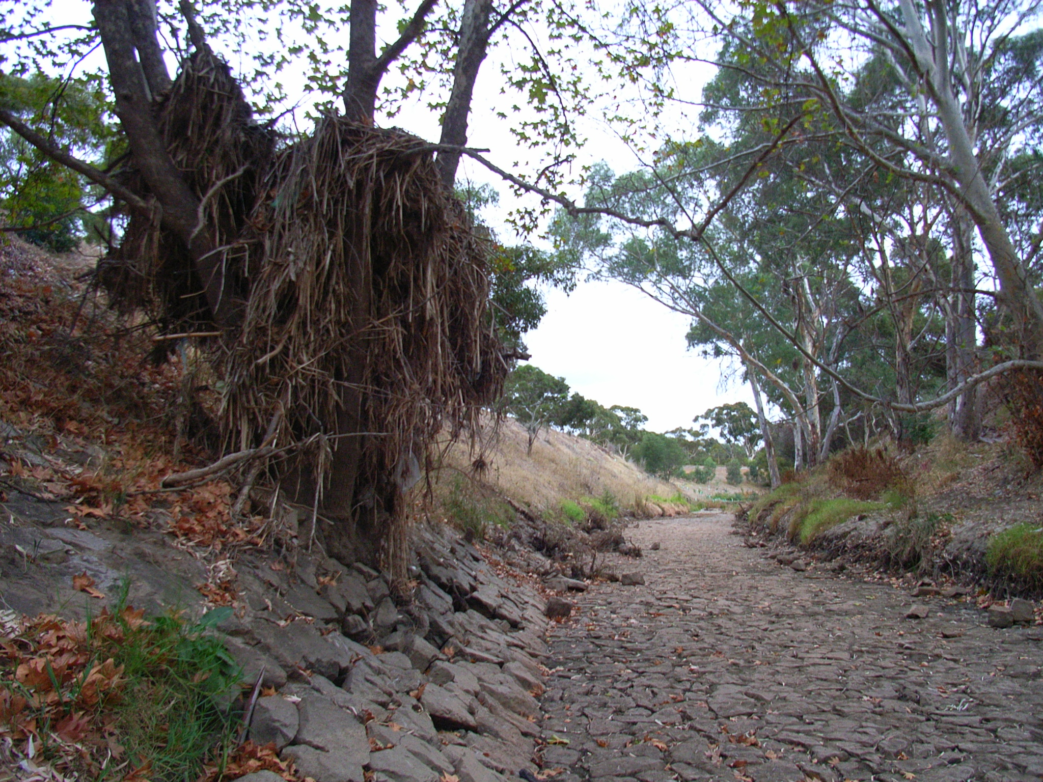 File Dry Creek Bed In Australia Jpg Wikimedia Commons