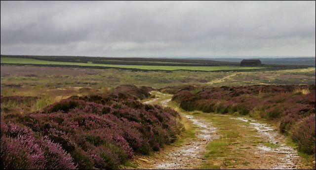 Field Barn on Hamer Moor - geograph.org.uk - 38649