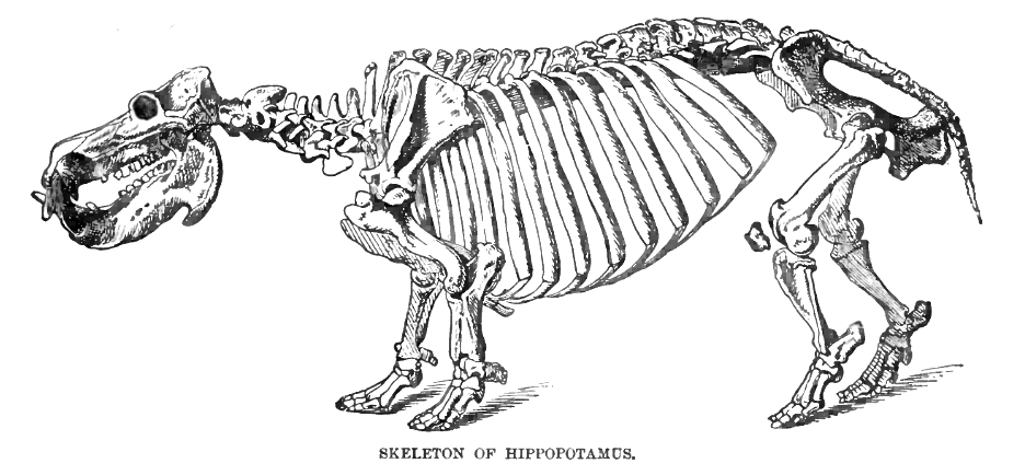 Filehipposkellyd2g Wikimedia Commons