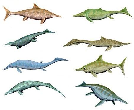 http://upload.wikimedia.org/wikipedia/commons/1/13/Ichthyosaurios5.jpg