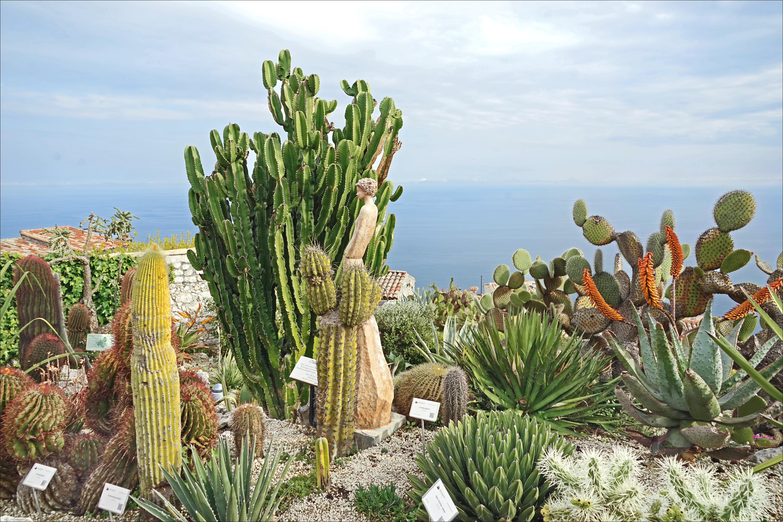 File Le Jardin Exotique D Eze Sur La Cote D Azur France