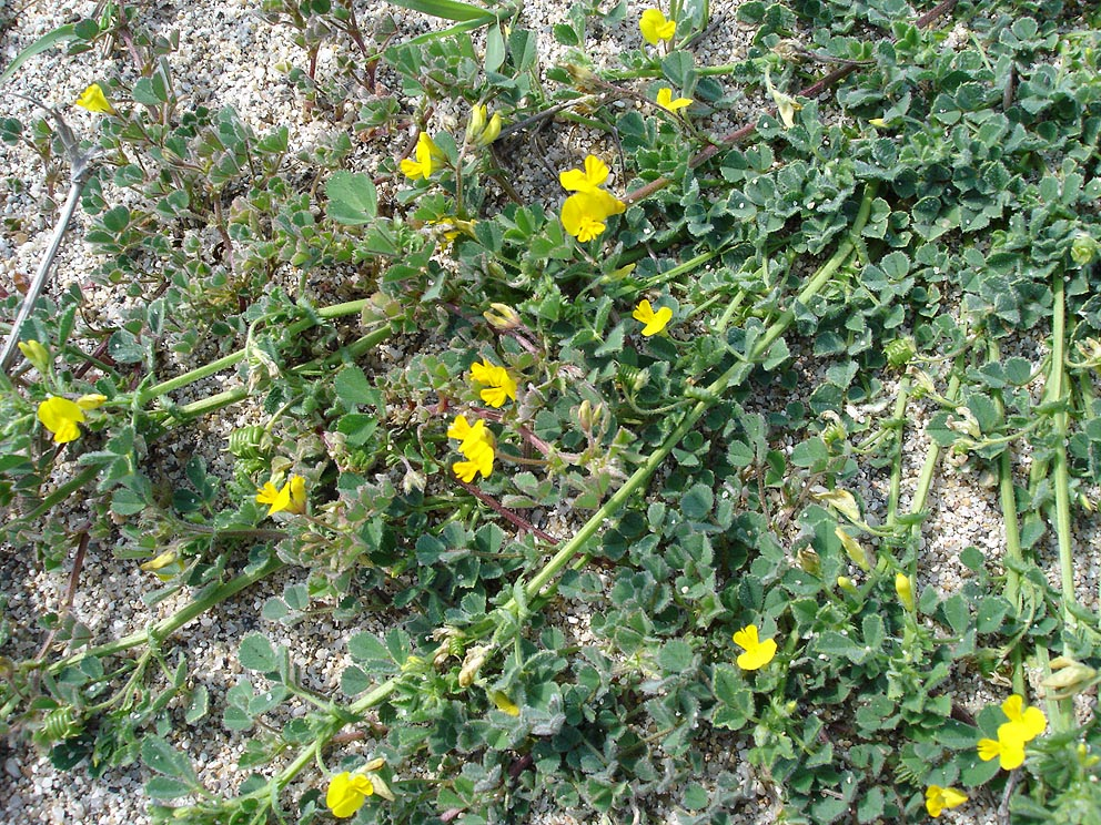 graine de fleurs a planter au printemps