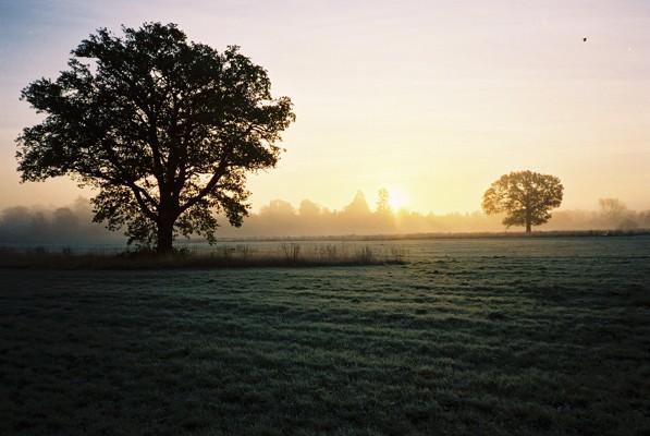 Misty dawn, Maidenhead Thicket - geograph.org.uk - 78552