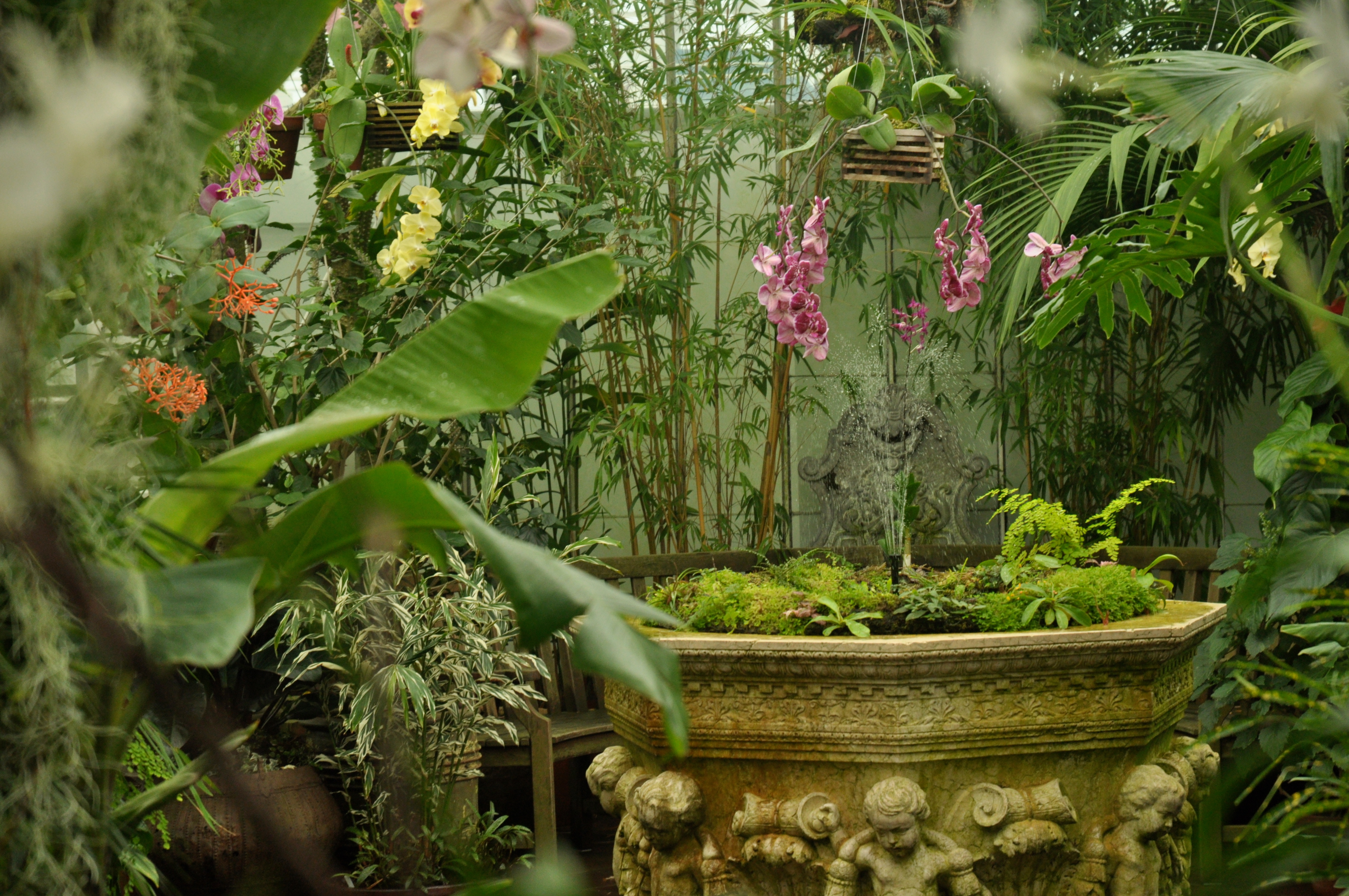 File orchids in ggp conservatory jpg wikimedia commons for Indoor gardening wikipedia