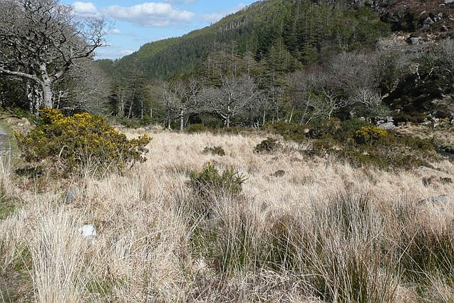 Owengariff River valley - geograph.org.uk - 777078