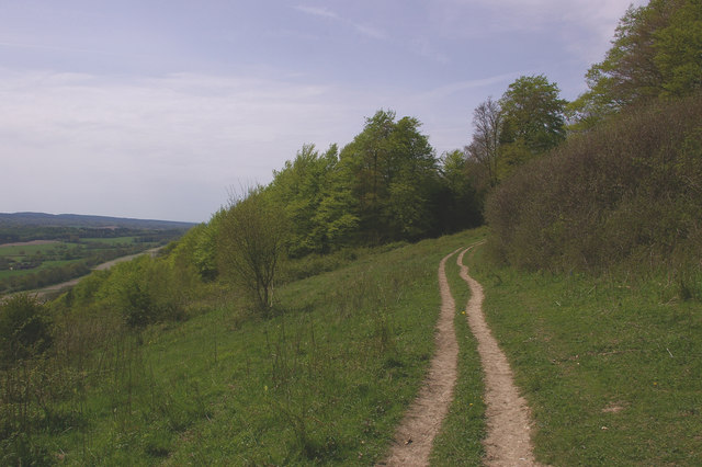 Path across Denbies Hillside - geograph.org.uk - 788692