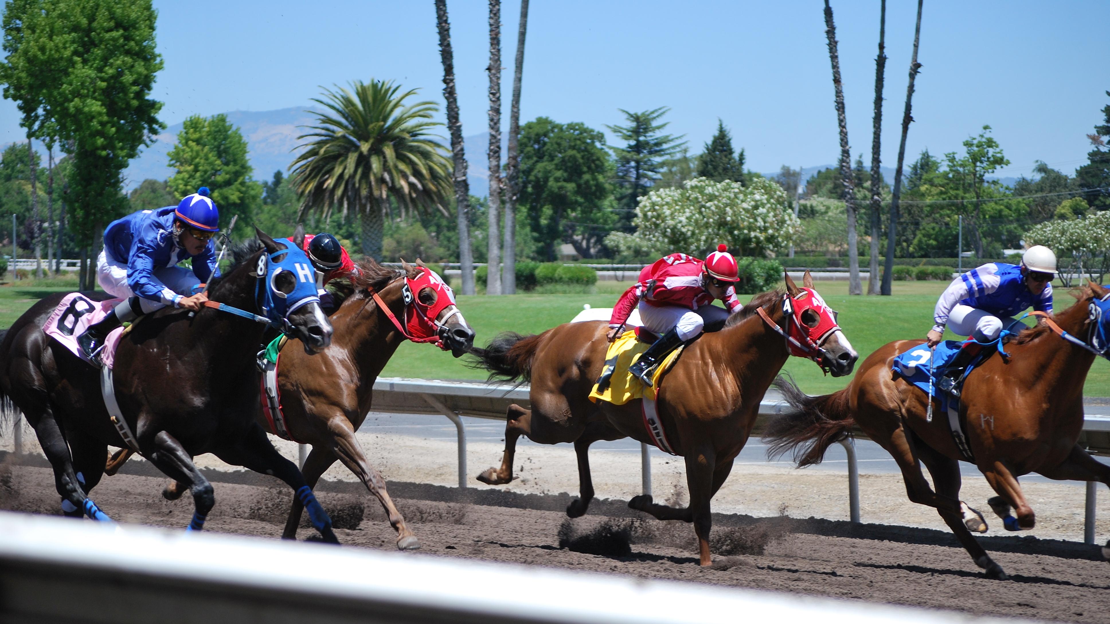 Photo_Quarter_Horse_Racing.jpg