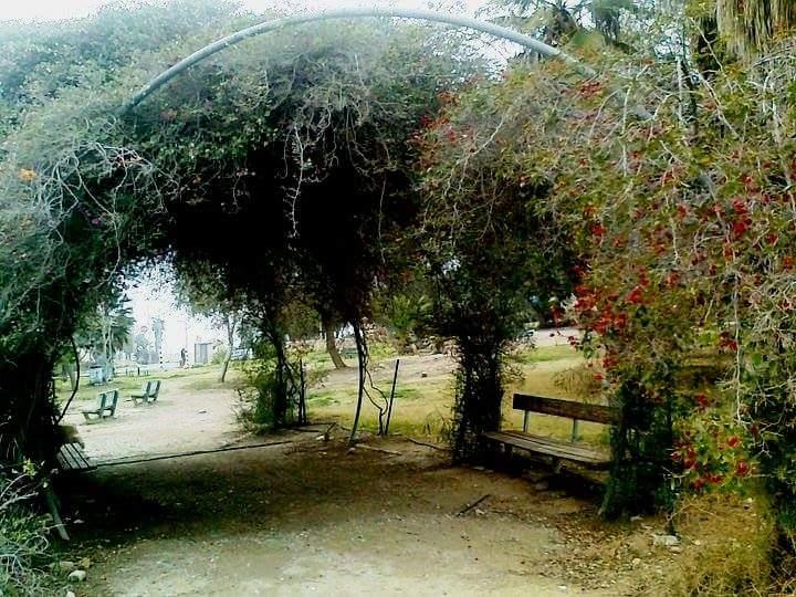 שער טבעי מצמחייה בערד