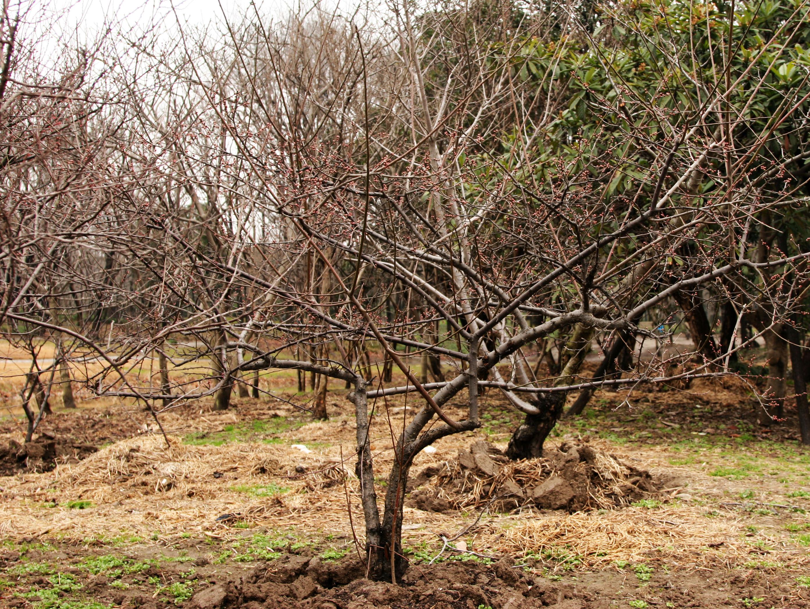 Виды, типы и сорта яблонь с фото и 14