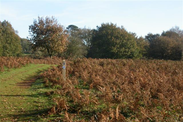 Puttenham Common - geograph.org.uk - 81617