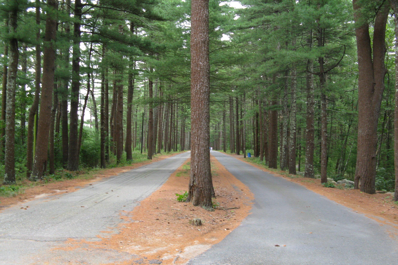 File:Savery Avenue, Carver MA.jpg - Wikimedia Commons