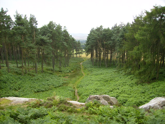 The path leading to St Cuthbert's Cave - geograph.org.uk - 517111